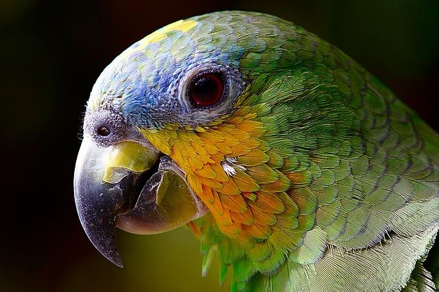 parrot-2756488_640